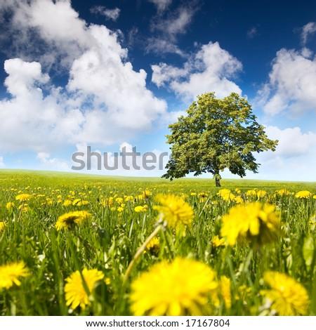 Tree in a field - stock photo
