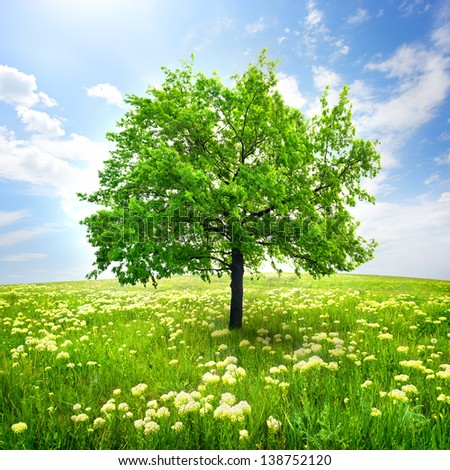 Tree in a field and wild flowers