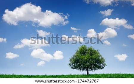 Tree in a field under a blue sky with clouds