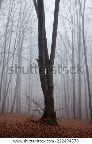 Tree in a forest in mist - stock photo