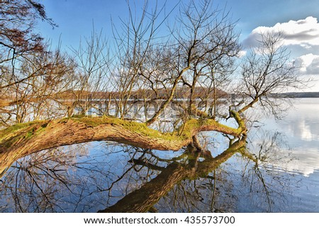 Tree in a lake in spring - stock photo