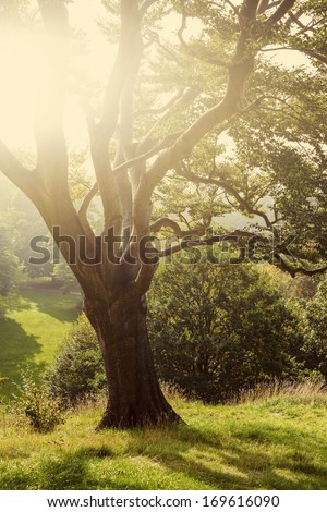 Tree in a park in the British countryside - stock photo