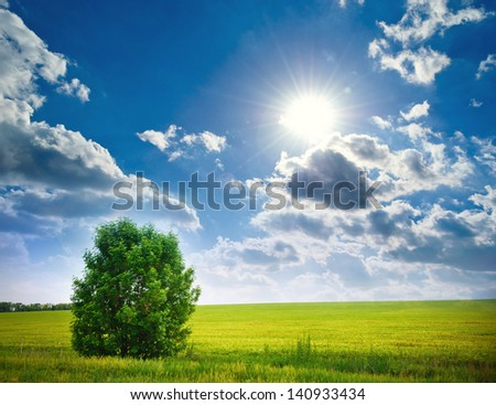 tree in a wheat field, farm landscape.. Composition of nature.