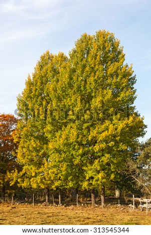 Tree in autumn colors at a fence - stock photo