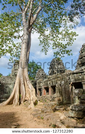 Tree in Banteay Kdei Temple - Angkor, Cambodia