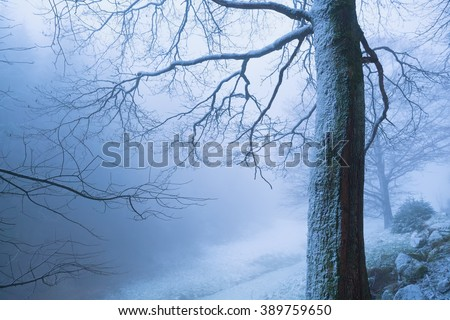 tree in deep winter fog, Baden-Wurttemberg, Germany