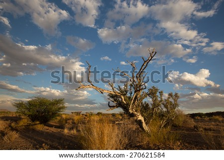 Tree in desert with cloudy blue sky, South Africa