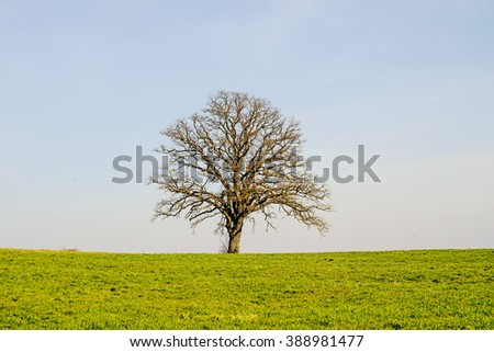 tree in early spring