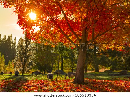 Tree in fall with colorful leafs