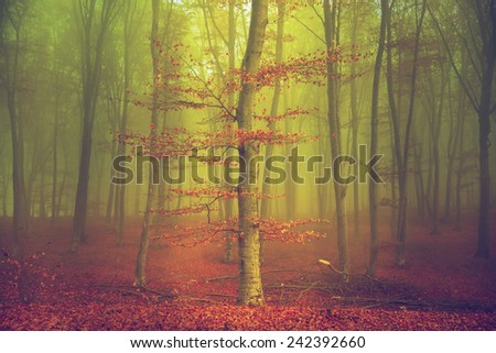Tree in foggy forest during autumn