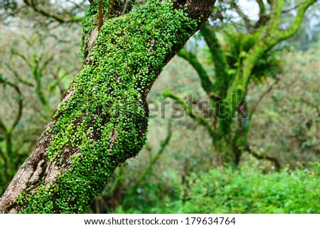 Tree in forest - stock photo