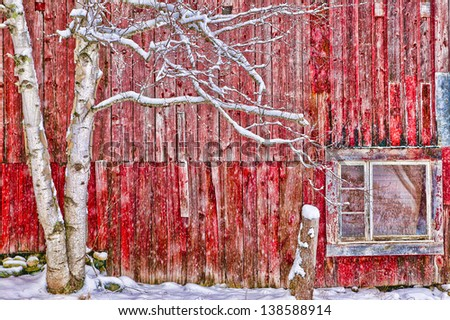 Tree in front of a red weathered barn, Stowe, Vermont, USA - stock photo