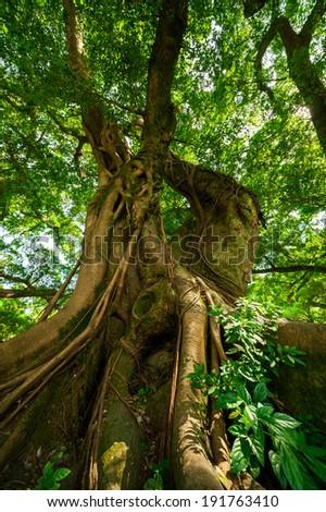 tree in Fujian Province, China - stock photo