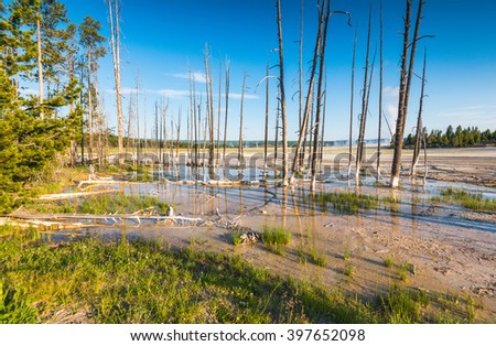 tree in geyser area in yellowstone National park,Wyoming,usa. - stock photo