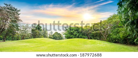 Tree in golf course on sunset time - stock photo