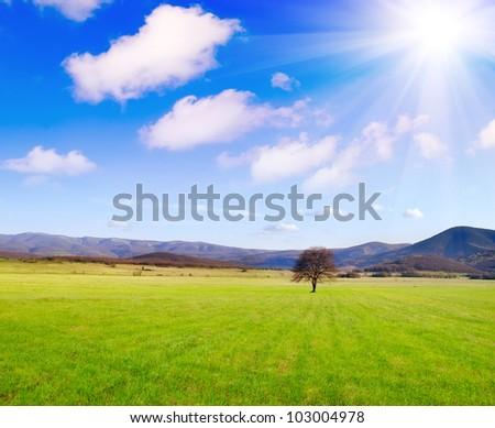 tree in green field - stock photo