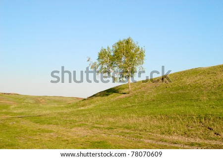 tree in green field against sky background