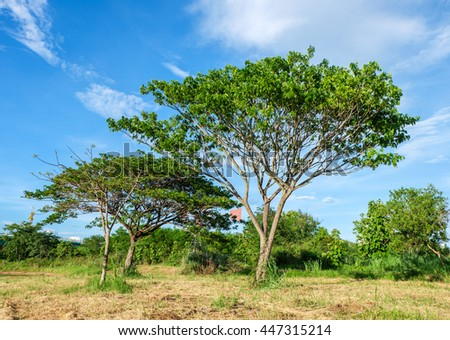 Tree in green park with blue sky and cloud. - stock photo