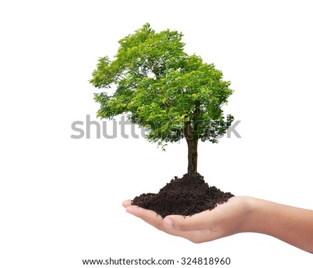 Stock images royalty free images vectors shutterstock for What do we use trees for