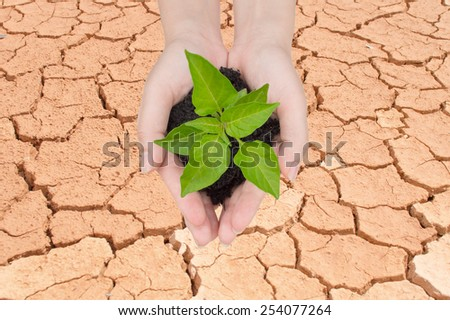 tree in hand with cracked earth background