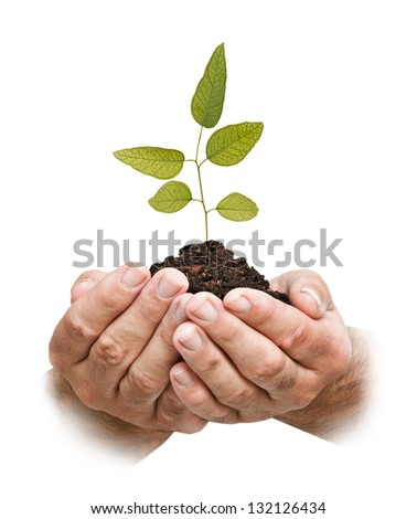tree in hands - stock photo