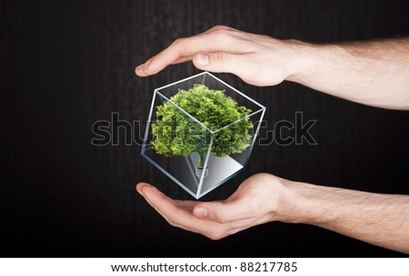 tree in hands. ecology concept - stock photo