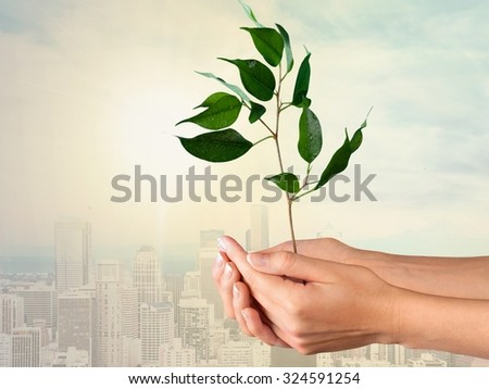 Tree in Human Hands. - stock photo