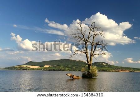 Tree in lake - stock photo