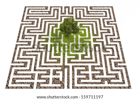 Tree in lost in labyrinth