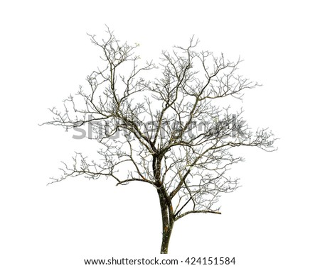 tree in nature photography on white background - stock photo