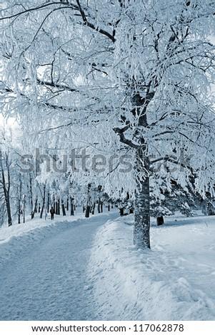 tree in park - stock photo