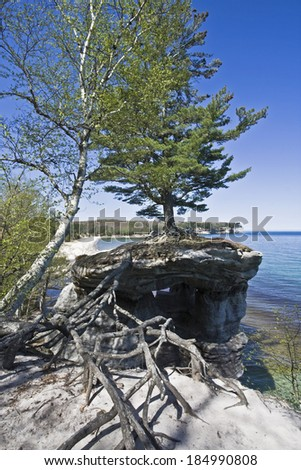 Tree in Pictured Rocks National Lakeshore - stock photo