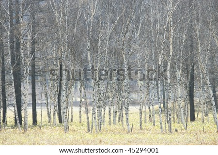 Tree in plateau - stock photo