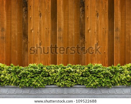 Tree in pot with wooden wall background - stock photo