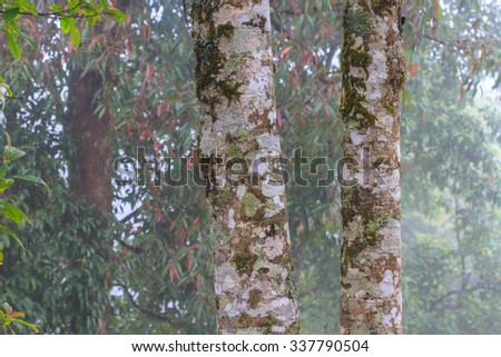 tree in rain forest, abstract nature background - stock photo