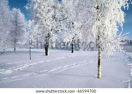 tree in snow - stock photo