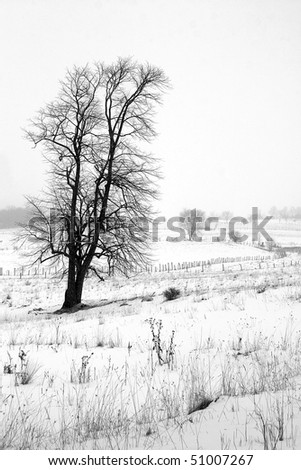 Tree In Snow Covered Field - stock photo