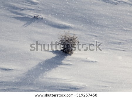 tree in snow in the mountains - stock photo
