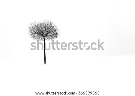 tree in snow isolated on white winter background