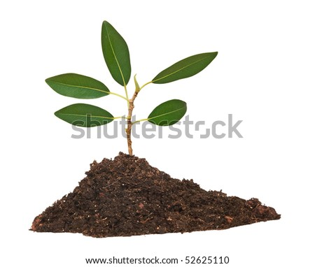 Tree in soil