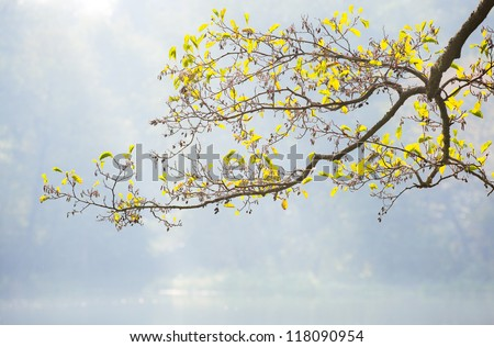 tree in spring - stock photo