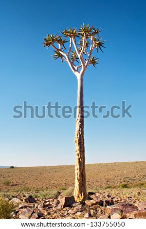 Tree in stone desert. Shot in Fish River Canyon National Park, Namibia. - stock photo