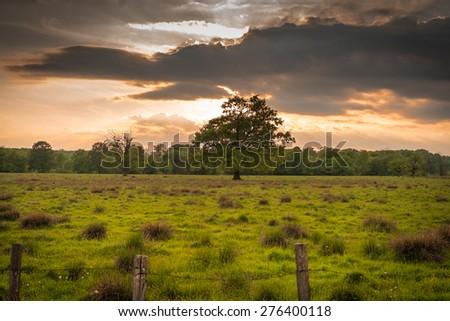 Tree in Sunset Light - stock photo