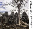 Tree in the ancient temples of Angkor Wat, near Siem Reap, Cambodia, South East Asia. - stock photo