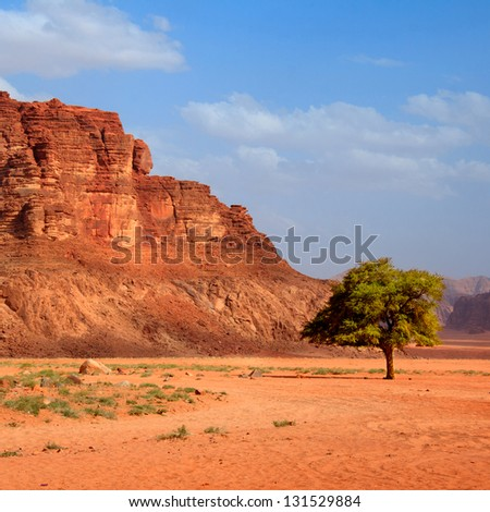 Tree in the desert - stock photo