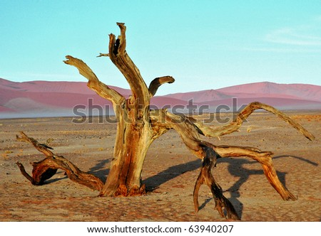 Tree in the desert, Namibia, Africa - stock photo