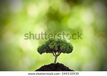 tree in the foreground - stock photo