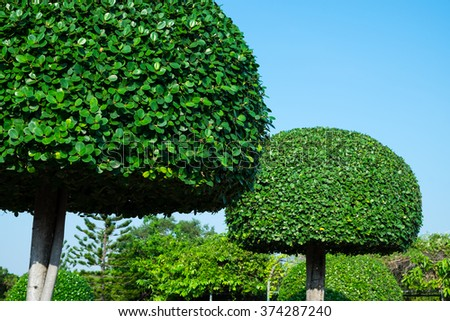 Tree in the garden - stock photo