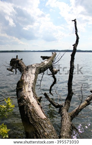 tree in the lake in the sunshine - stock photo