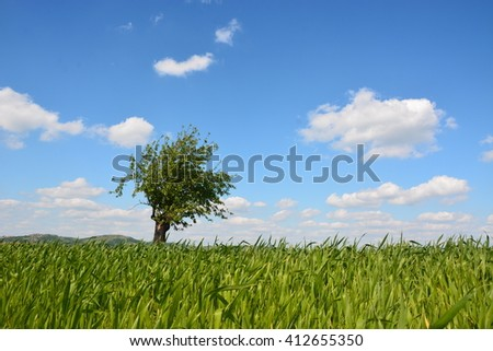 Tree in the meadow   - stock photo